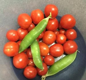 Vegetables summer 2019