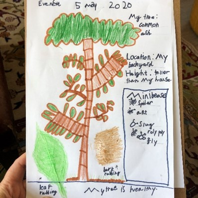 Y1 Science Tree Research May 2020